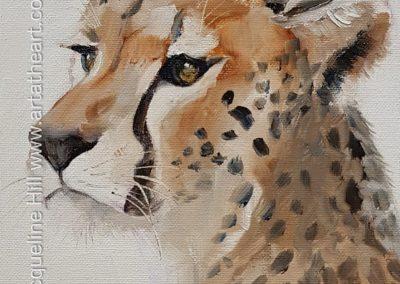 DA256 Cheetah