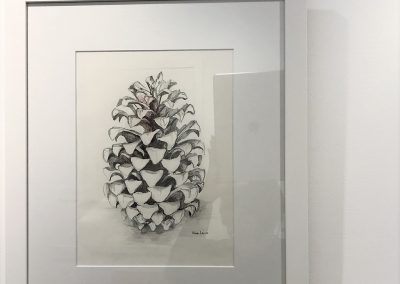 Fir Cone by Karen Lewis